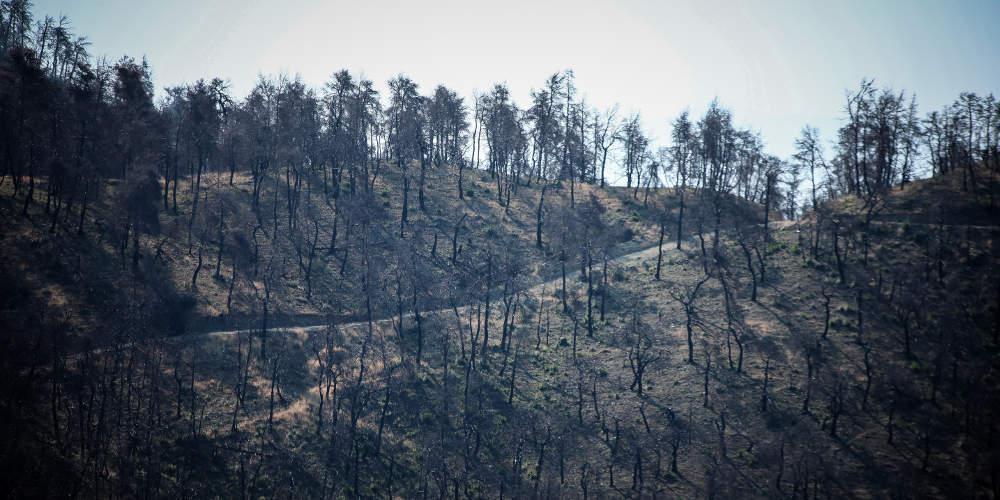 Πυρκαγιά στην Εύβοια: «Σπάει» το τηλεφωνικό απόρρητο για τους τρεις υπόπτους για εμπρησμό