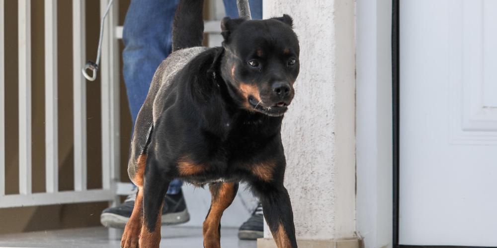 Θεσσαλονίκη: Την λήστεψαν με την απειλή… μεγαλόσωμου σκύλου