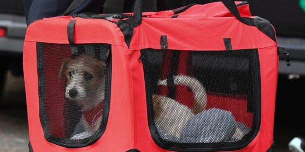 «Τρέμει» η θέση του Λάρι του γάτου - Ο σκύλος του Μπόρις Τζόνσον νέος ένοικος στη Downing Street