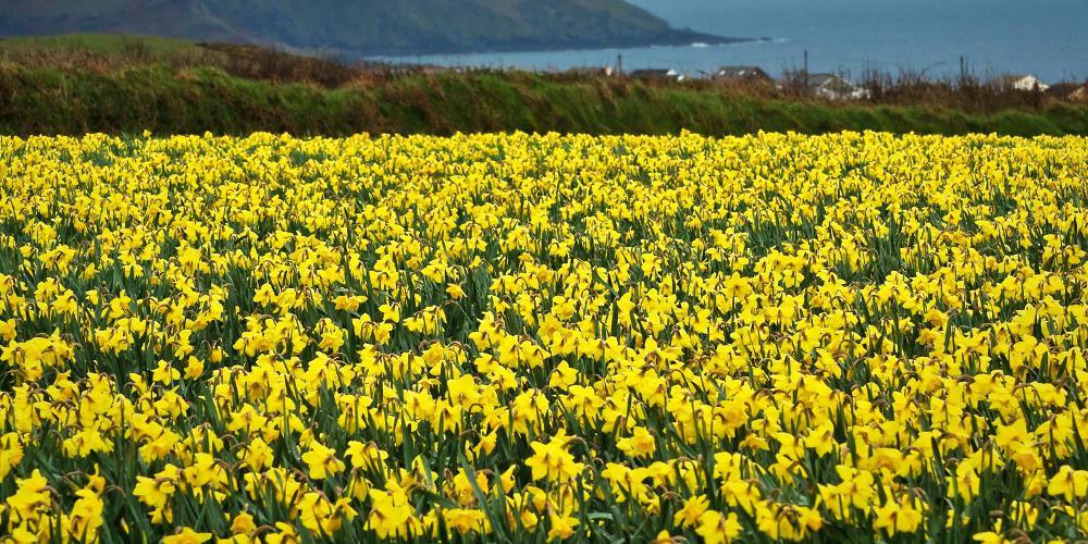 Η γλώσσα των χρωμάτων: Το κίτρινο είναι χαρούμενο εκτός… αν είσαι Έλληνας!
