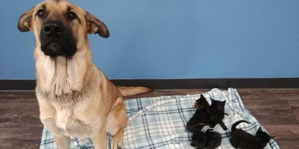 Αδέσποτη σκυλίτσα έσωσε από βέβαιο θάνατο εγκαταλελειμμένα νεογέννητα γατάκια