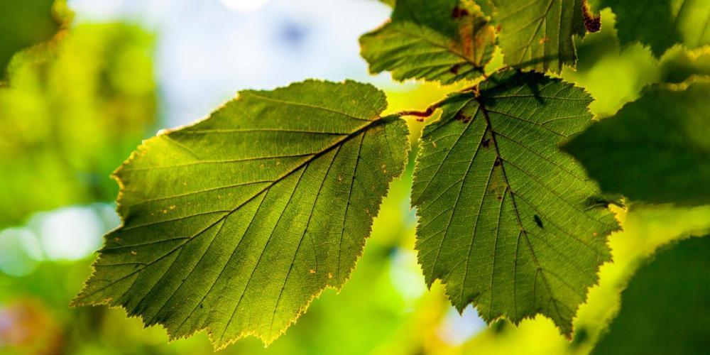 Επιστήμονες δημιούργησαν τεχνητό φύλλο που μετατρέπει διοξείδιο του άνθρακα σε καύσιμο