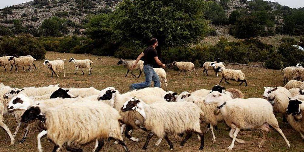 Ακατάσχετο πρώτης κατοικίας - στάβλων και διαγραφή του 80% των δανείων ζητούν οι κτηνοτρόφοι