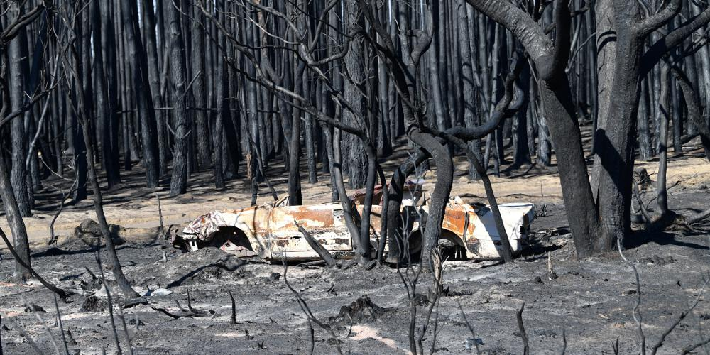 Αυστραλία: «Ολοκαύτωμα» για την πανίδα οι πυρκαγιές