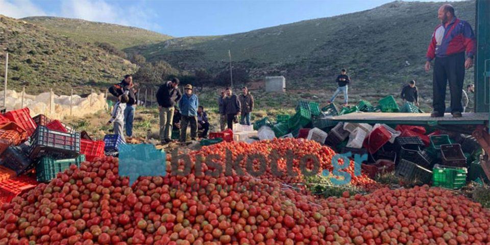 Κρήτη: Σε απόγνωση οι παραγωγοί – Πετούν 50 τόνους ντομάτας ημερησίως [βίντεο]