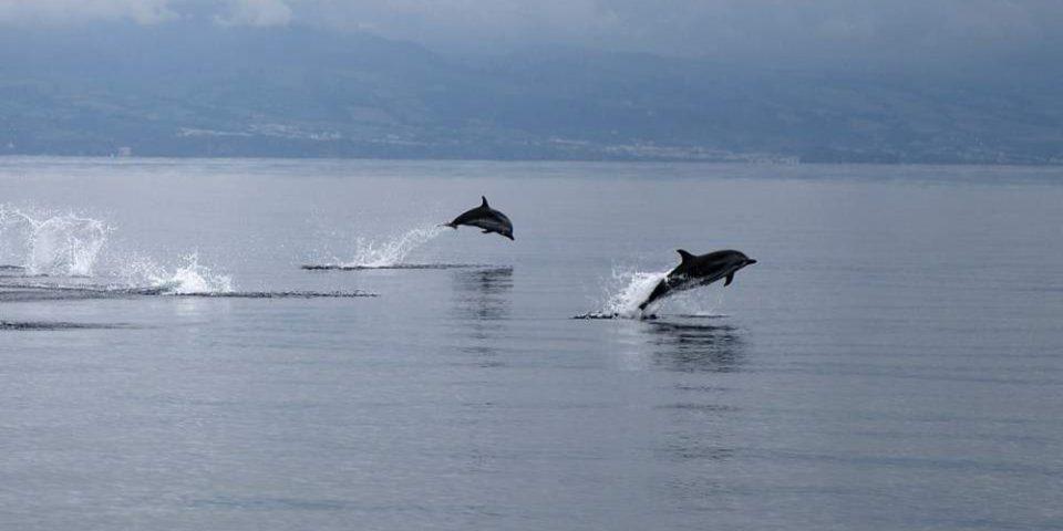Θεσσαλονίκη: Δελφίνια έκαναν την εμφάνισή τους στον Θερμαϊκό