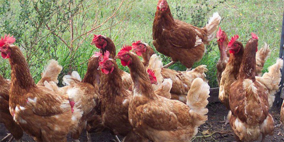 Κορωνοϊός: Οι ασθένειες που μεταδίδουν τα ζώα - Ο ειδικός που εξηγεί από που προήλθαν οι επιδημίες