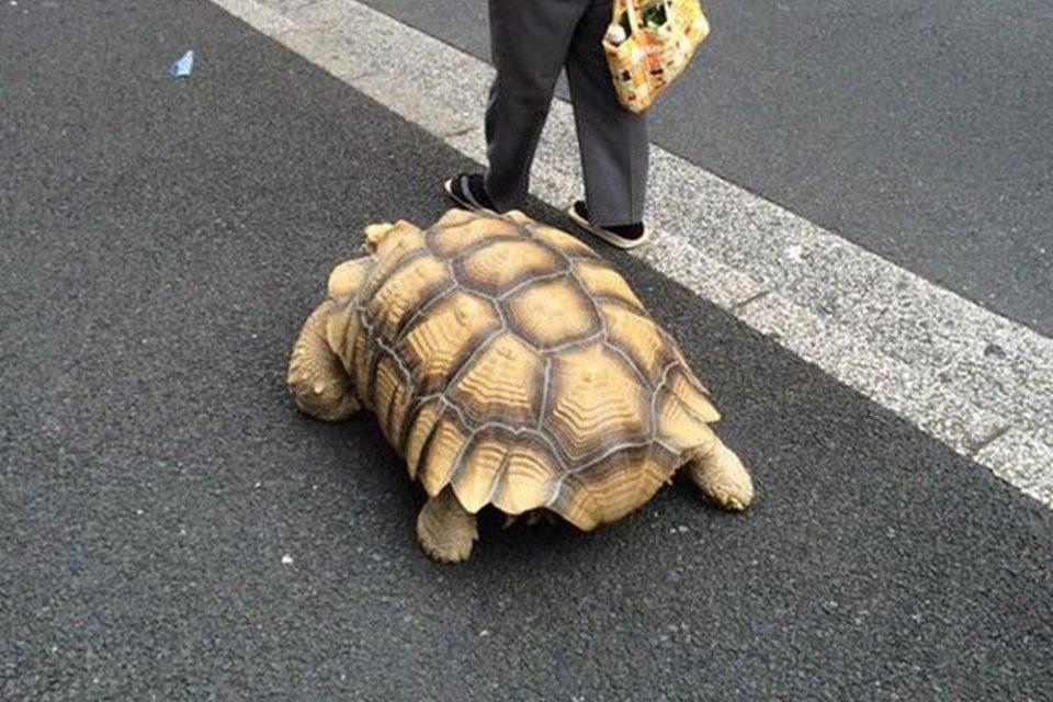 Κορωνοϊός: Πρόστιμο 400 ευρώ σε 60χρονη που έβγαλε βόλτα τη... χελώνα της