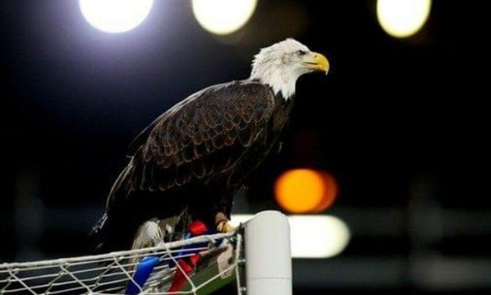 «Εφυγε» ο αγαπημένος αετός της Κρίσταλ Πάλας