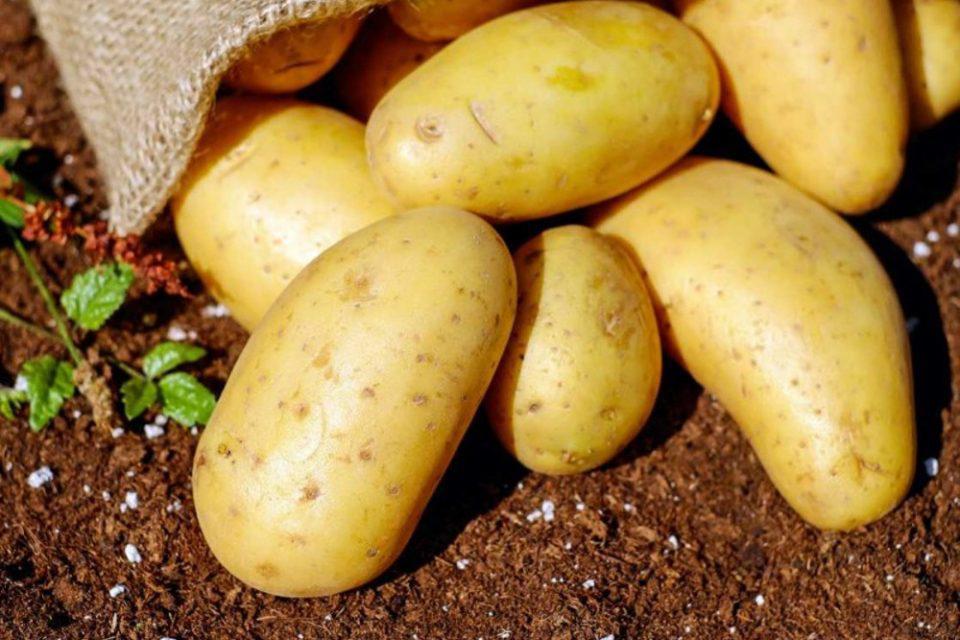 Μεγάλη προσοχή: Αν οι πατάτες σου έχουν αυτό το χρώμα είναι επικίνδυνες!
