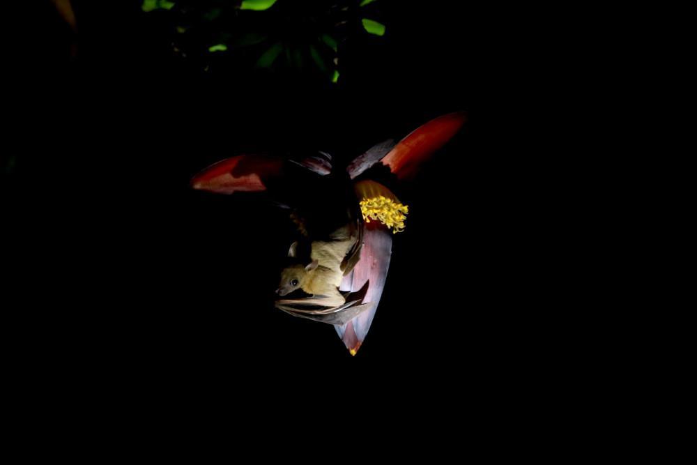 Εύρημα «σοκ»: Βρέθηκαν κορωνοϊοί, συγγενικοί με τον SARS-CoV-2, σε νυχτερίδες φυλαγμένες σε καταψύκτες εργαστηρίων