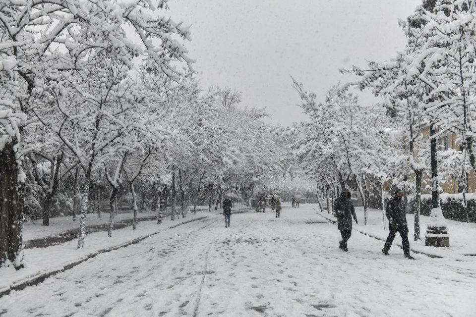 Καιρός - Κακοκαιρία «Μήδεια»: Το χιόνι ήταν πιο υγρό και πιο βαρύ, γι' αυτό έπεσαν πολλά δέντρα