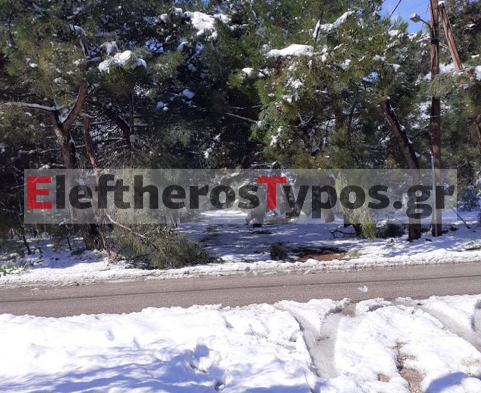 Καιρός - «Μήδεια»: Χάος με «ετοιμόρροπα» δέντρα στους δρόμους - Κίνδυνος θάνατος για πεζούς και ΙΧ