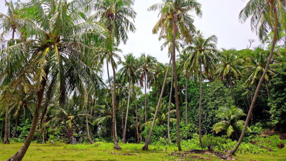 Αληθινό Survivor: Ναυάγησαν σε ερημικό νησί 33 μέρες και επιβίωναν τρώγοντας καρύδες