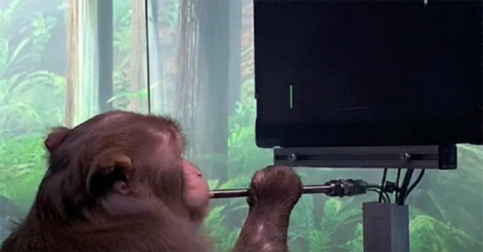 Η Neuralink τα κατάφερε: Μαϊμού παίζει βιντεοπαιχνίδι με τη σκέψη [βίντεο]
