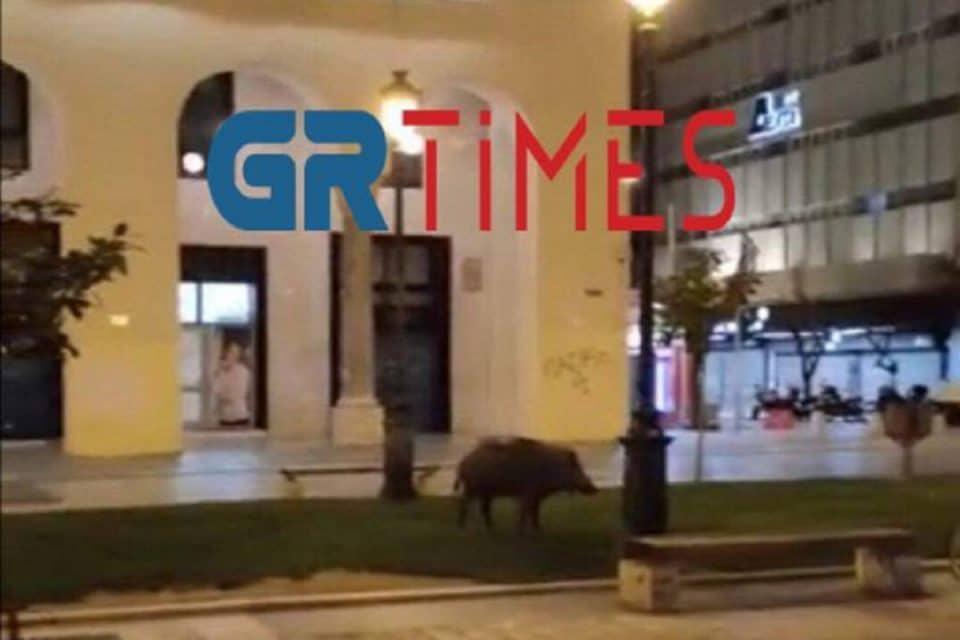 Θεσσαλονίκη: Επανεμφανίστηκε το αγριογούρουνο – Δείτε το να κάνει βόλτα στην πλατεία Αριστοτέλους [video]