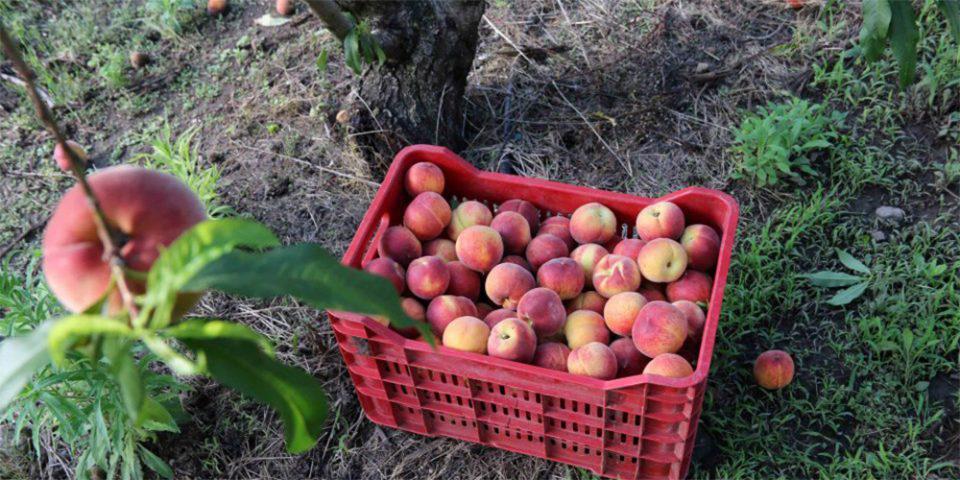 «Γκάζωσαν» οι εξαγωγές φρούτων και λαχανικών - Τα στοιχεία