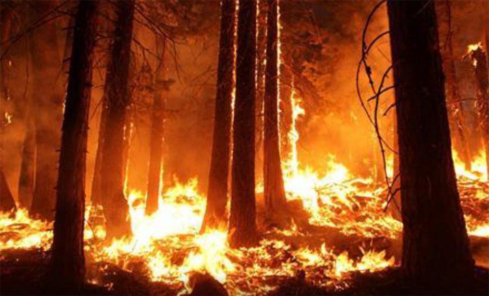 Καλιφόρνια: Γιγάντιο δέντρο σεκόγια καίγεται από το καλοκαίρι του 2020
