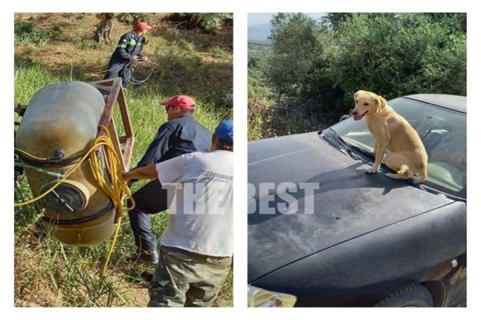 Μαζαράκι Αχαϊας: Συγκινεί ο μικρός «χάτσικο» - Ανέβηκε στο καπό του αυτοκινήτου για να φύγει με το «αφεντικό» του που τραυματίστηκε