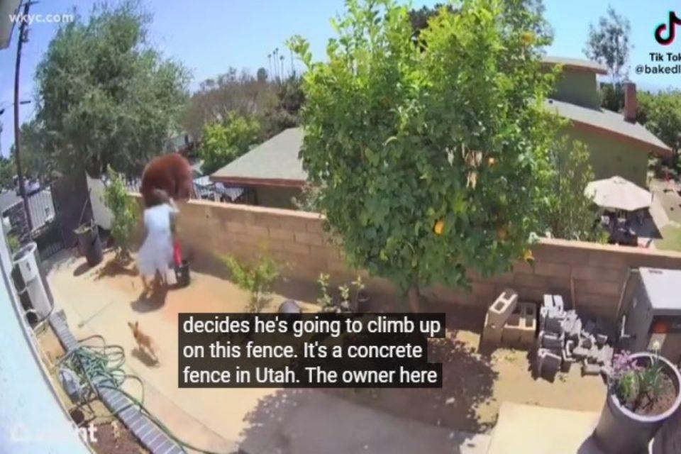 TikTok: Viral η 17χρονη που παλεύει με αρκούδα για να σώσει τα σκυλιά της [βίντεο]