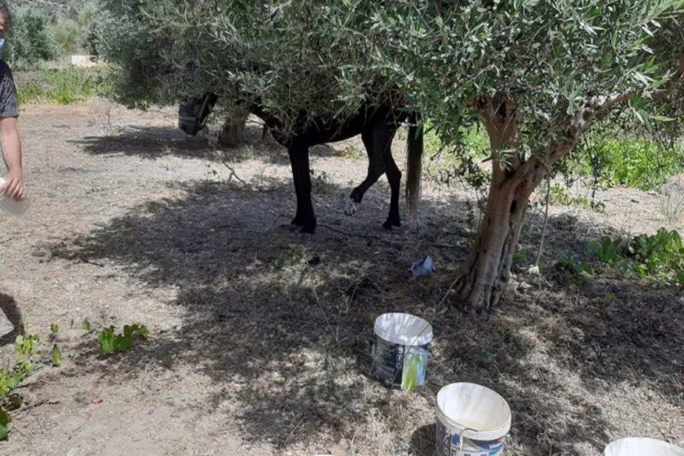 Κρήτη: Πρόστιμο 30.000 ευρώ για κακοποίηση αλόγου – Του έβγαλε την οπλή