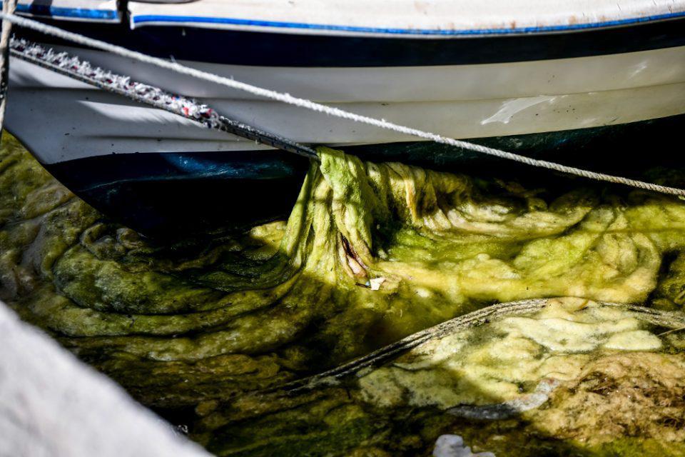 Πρέβεζα: Πνίγεται στην «πράσινη παλίρροια» το λιμάνι [εικόνες]