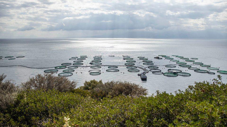 ΕΛΟΠΥ: Δύο νέα ερευνητικά έργα για το περιβάλλον