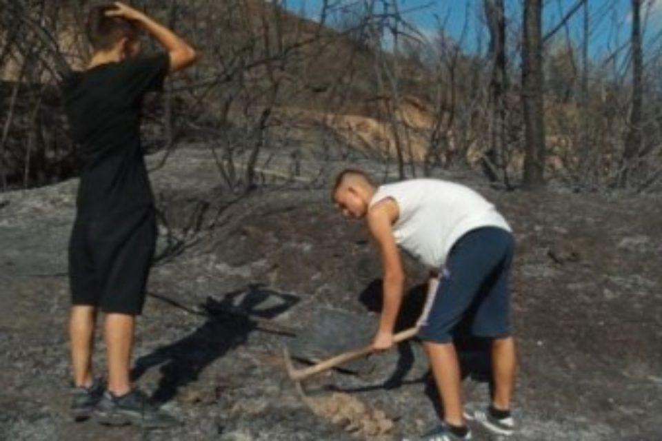 Φωτιά στην Αρχαία Ολυμπία: Το πρώτο δέντρο πάνω στις καμμένες στάχτες - Η εικόνα που έγινε viral σε λίγες ώρες