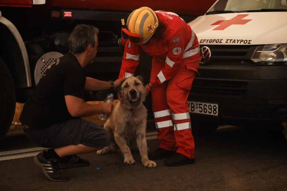 Φωτιά στην Βαρυμπόμπη: Αστυνομικοί έσωσαν σκύλο από την πύρινη λαίλαπα – Συγκλονιστικές εικόνες