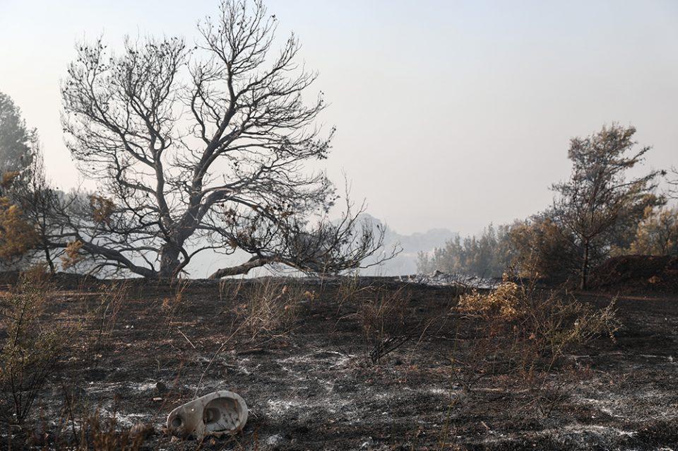 Φωτιά στην Βαρυμπόμπη: Πώς εξαπλώθηκε η πυρκαγιά [βίντεο]