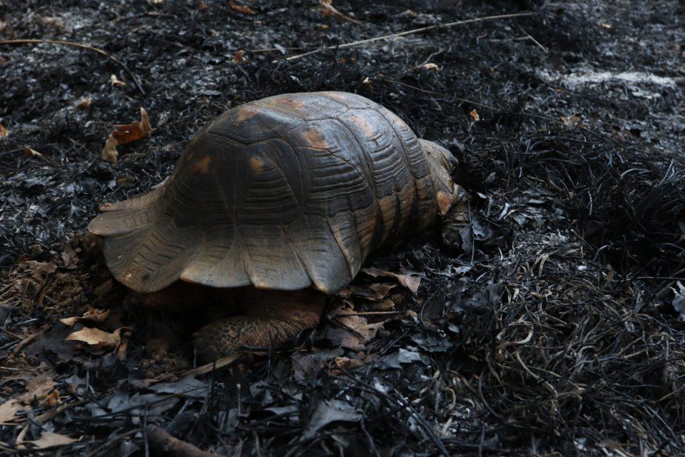 Φωτιά στην Αττική: Δράσεις για τα πυρόπληκτα ζώα από την Περιφέρεια